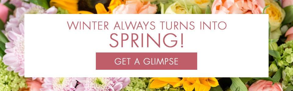 Spring Flowers Everett, Lynnwood, WA
