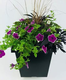 Summer Outdoor Planter