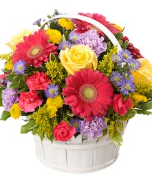 A classic spring basket arrangement full of a mixture of gerbera daisies, roses, carnations and other premium seasonal blooms.