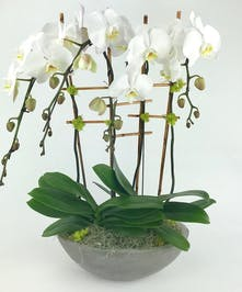 A modern concrete-looking bowl filled with waterfall Phalaenopsis orchids