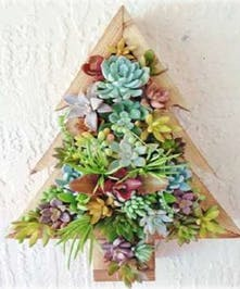 Wooden Christmas tree planted with a variety of easy care succulents and echeveria.