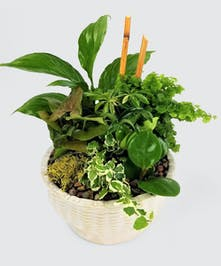 Tropical green plants in a ceramic dish.