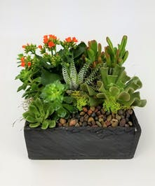 This low maintenance garden comes with a flowering kalanchoe and other assorted succulents in a contemporary slate-like square. Plant colors may vary based on availability.