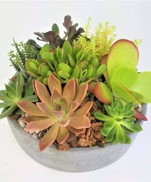 A contemporary circle filled with succulents; perfect for a desk or a centerpiece.  Succulents may vary based on availability.