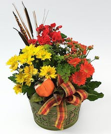 A bright fall mix of blooming plants with foliage and a pumpkin accent in a seasonal metal tin with burlap accents.