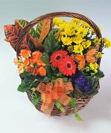 Grab a hold of this summertime basket, full of richly colored blooms and green plants!