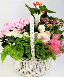 This pastel garden basket is full of fresh blooming and green plants sure to make any recipient smile. A watchful angel completes this extraordinary gift.