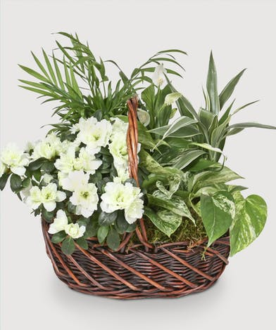 A variety of green tropical plants accented by a blooming white plant in a dark basket.