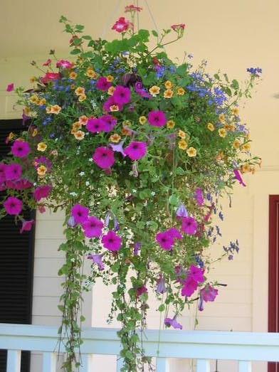 Mixed potted plants that enjoy being in the sun.