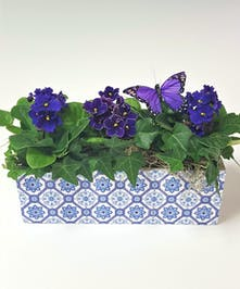 The Moroccan-style print on this container is the inspiration for our garden of African Violets and ivy. African Violet color may vary.
