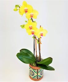 Portuguese- style pottery with a bold orchid is the perfect statement piece. Colors of pot and orchid are designer's choice.