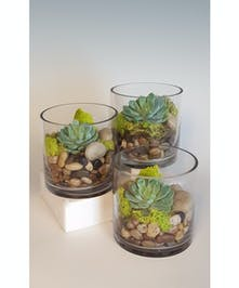 A trio of cylinders with an individual succulent nested among rocks and moss. Use all three as a centerpiece or pass them out to friends!
