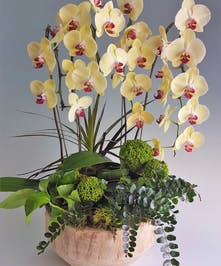 Two Phalaenopsis Orchids surrounded by green plants in a large wooden bowl.