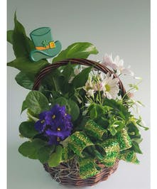 A garden with shamrock, African Violet and other tropical plants to celebrate St. Patrick's Day!