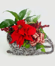 A snowy sleigh planted with green plants and a poinsettia to celebrate the holiday season.