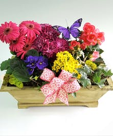 A wooden green window box with a bright mix of spring- colored plants and accented with a butterfly and ribbon.