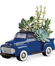 A ceramic 1948 Ford F-1 Pick-up truck with long-lasting succulents will be the perfect conversation piece!