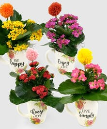 A long lasting, bright kalanchoe in a ceramic mug that encourages positive thinking and topped off with a pom pom wand.