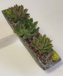 A stone, boat-style dish with a trio of assorted succulents and accented with moss and rock.
