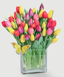 Tulip Tango - Fresh Tulips - Same-day Delivery Everett, WA
