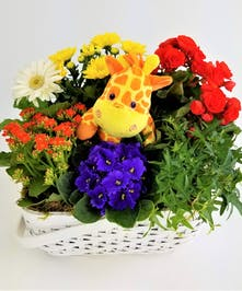 Send a big welcome with a white basket filled with primary colored blooming plants and a plush toy. Approximate size of Deluxe (Shown) is 13