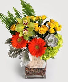 Natural river rocks with birch accents compliment these bright oranges, yellow and greens. roses, hydrangea and gerbera daisy are the perfect gift.