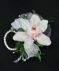 Cymbidium Orchid Package