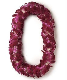 Graduation Orchid Lei Everett (WA) Same-day Hand Delivery