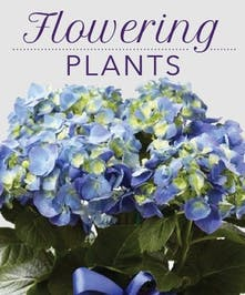Designer choice Flowering Plants  - Stadium Flowers