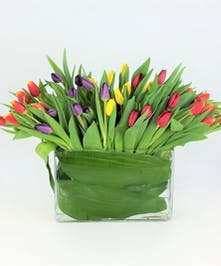 fresh bright mix of local tulips in a clear glass vase. Elegantly styled with  Leaves wrapped inside the vase . Choose the Premium mix with 60 stems .
