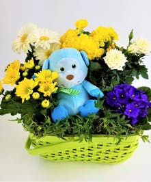 Send a big welcome with a green basket filled with yellow, white and blue blooming plants and a plush toy. Approximate size of Deluxe (Shown) is 13