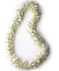 White Orchid Lei