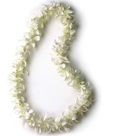 White Orchid Lei Lynnwood (WA) Same-day Graduation Delivery