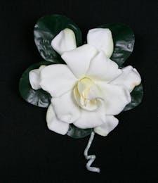 Gardenia Package