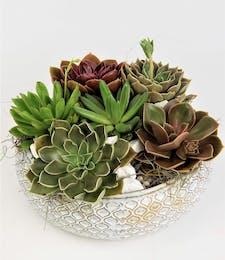 Sea Glass Succulents